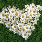春に咲く花写真図鑑と花言葉の意味には意外なものが!