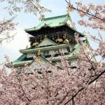 大阪城公園の桜2017の開花夜桜はいつ?お花見の場所取りは必要?