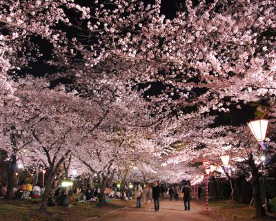 大阪城 西の丸庭園 桜