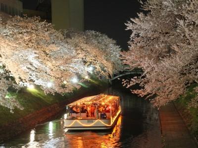 松川公園 夜桜