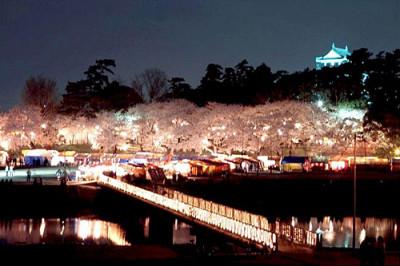 岡崎城 夜桜