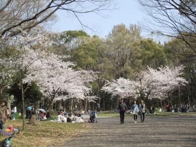 大阪城公園 市民の森 桜
