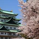 名古屋城の桜2017ライトアップはいつから?屋台や駐車場はあるの?
