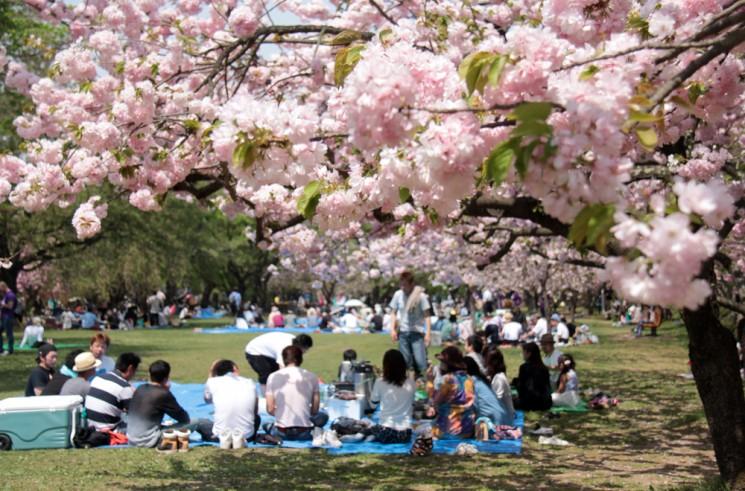 弘前公園 お花見