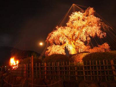 京都 円山公園 夜桜