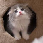 猫のにおいが部屋から消えた!イヤなにおい対策もこれでバッチリ!