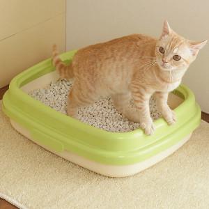 猫 トイレ
