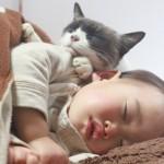 猫と赤ちゃんが仲良く同居するには?アレルギーは大丈夫?