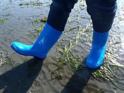 潮干狩り 長靴