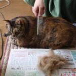 猫の抜け毛がヒドくて…そんな悩みも解決できる!猫の抜け毛対策