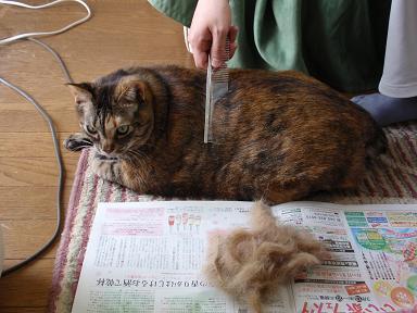 猫 抜け毛