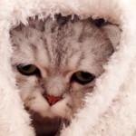 猫の風邪は人間よりも大変なことに!その症状は?治し方と予防法