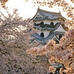 彦根城の桜2017開花は?屋台はあるの?お花見前にチェック