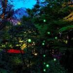 椿山荘ほたるの夕べ2017日程と見どころ!入場は無料なのか?