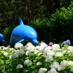 八景島あじさい2017見ごろ開花状況!アクセス駐車場は?