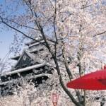 松江城山公園の桜2019開花予想見どころ!ライトアップと駐車場は?