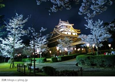 松江城 夜桜