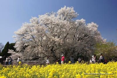出典 http://morimori.txt-nifty.com/kyusyu/kumamoto_issin/1204issin01.jpg