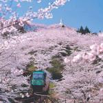 船岡城址公園の桜2018開花見ごろライトアップはいつ?駐車場は?
