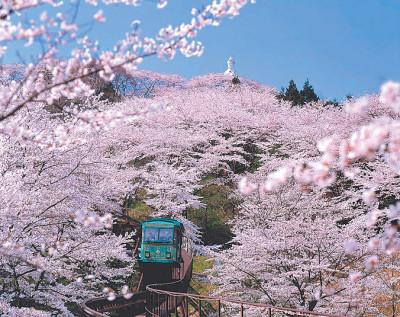 船岡城址公園 桜