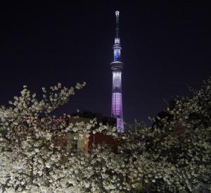 スカイツリー 夜桜