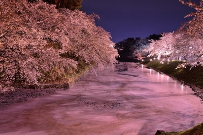 弘前公園 夜桜