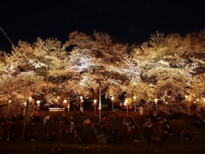 白石川堤一目千本桜 夜桜