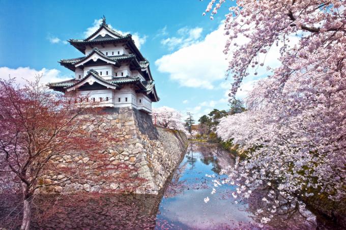 弘前城 桜