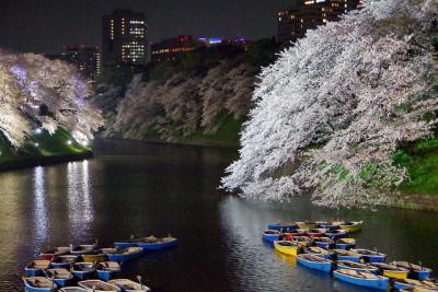 千鳥ヶ淵 夜桜 ボート