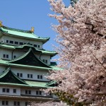 名古屋城の桜2018ライトアップはいつから?屋台や駐車場はあるの?