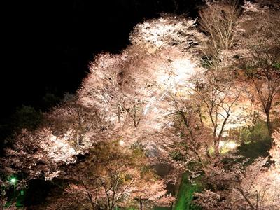吉野山 夜桜