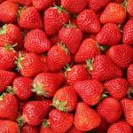 イチゴ狩りでおいしいイチゴを見分けるには?おいしい食べ方も紹介!