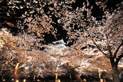 鶴ヶ城 夜桜