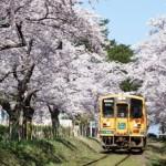 津軽鉄道 桜