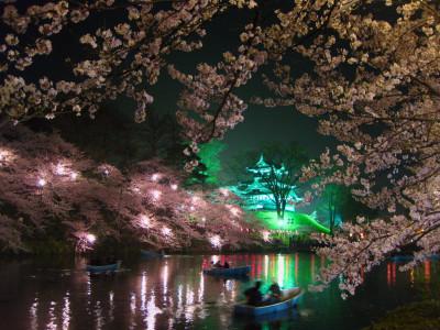 髙田公園 夜桜