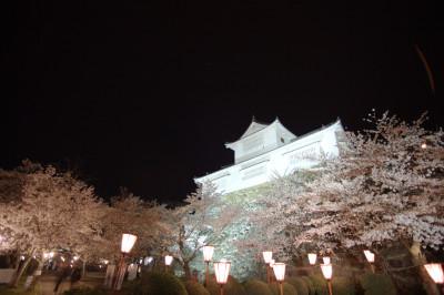 津山城鶴山公園 夜桜