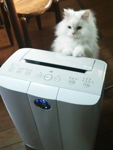 猫 空気清浄機