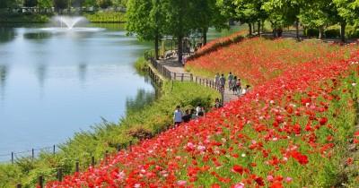 花フェスタ記念公園 バラ園