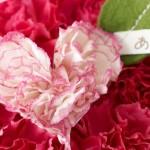 婚約中の母の日に義理の母へプレゼントするベストな方法はこれ!