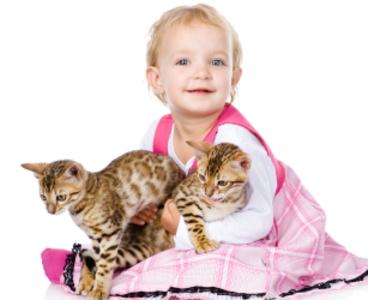 猫 赤ちゃん 仲良し