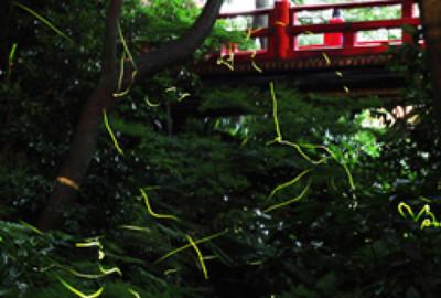 椿山荘ほたるの夕べ